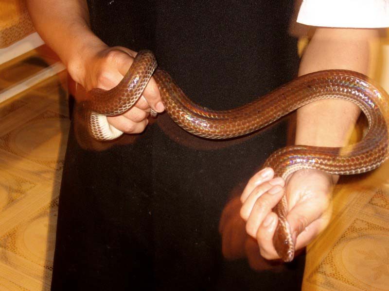 1-змея-в-руках