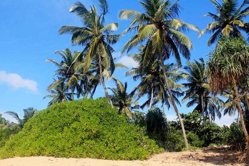 14-тангол-фото-пляж