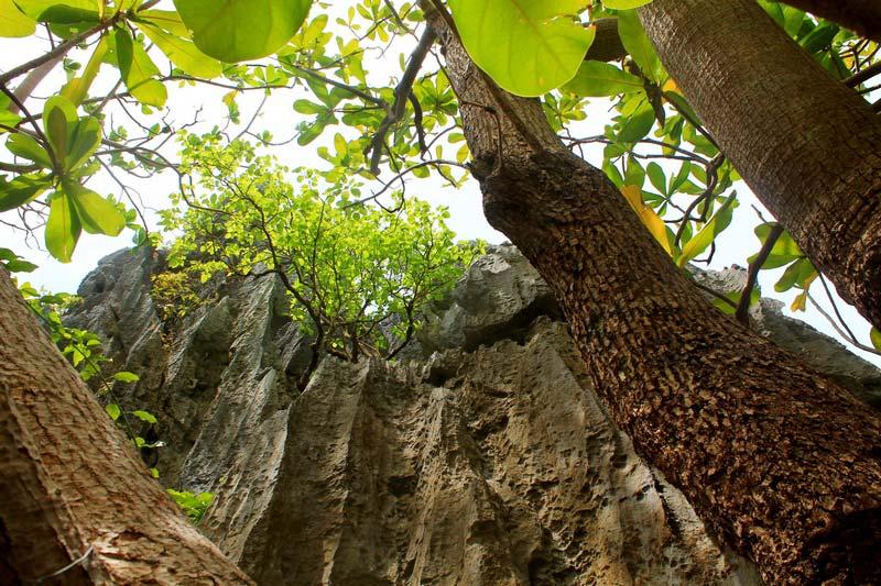 17а-дерево-и-скалы