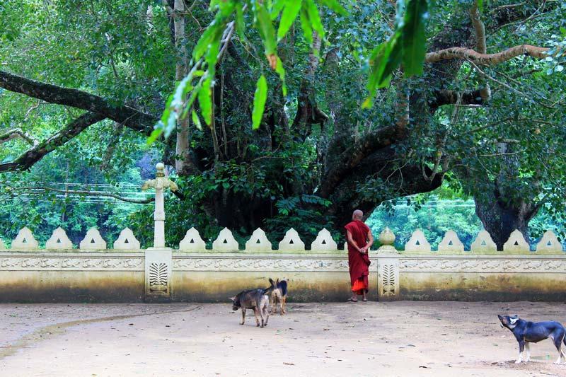 37-буддистский-храм-дерево