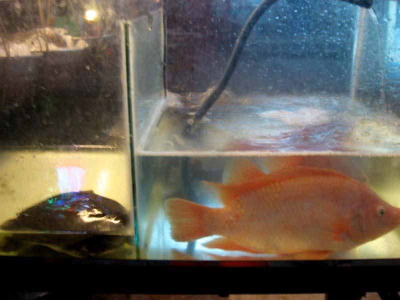 6 рыба в аквариуме для готовки