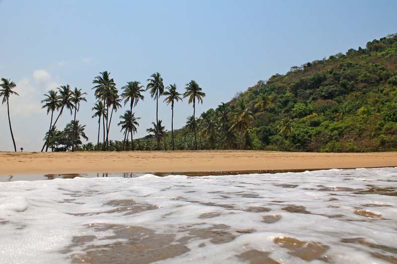 агонда-пальмы