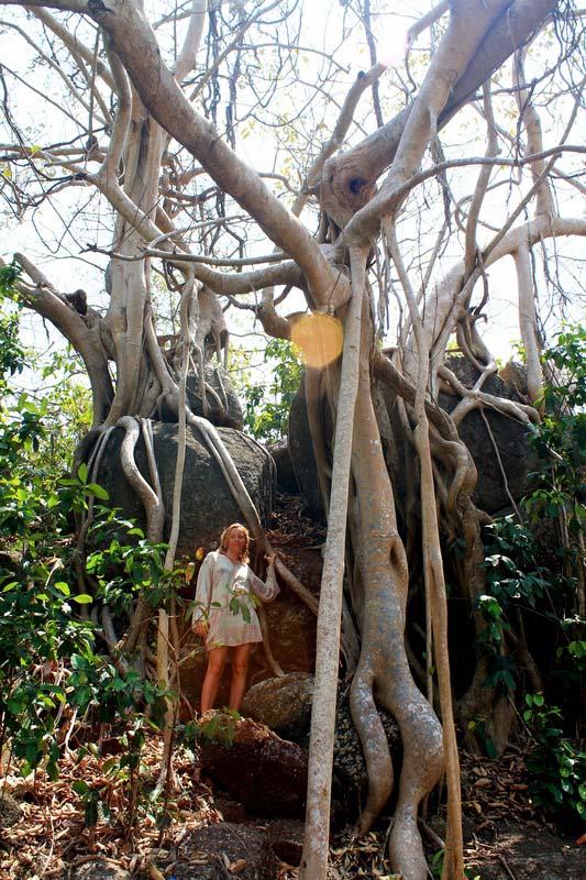 гоа-джунгли