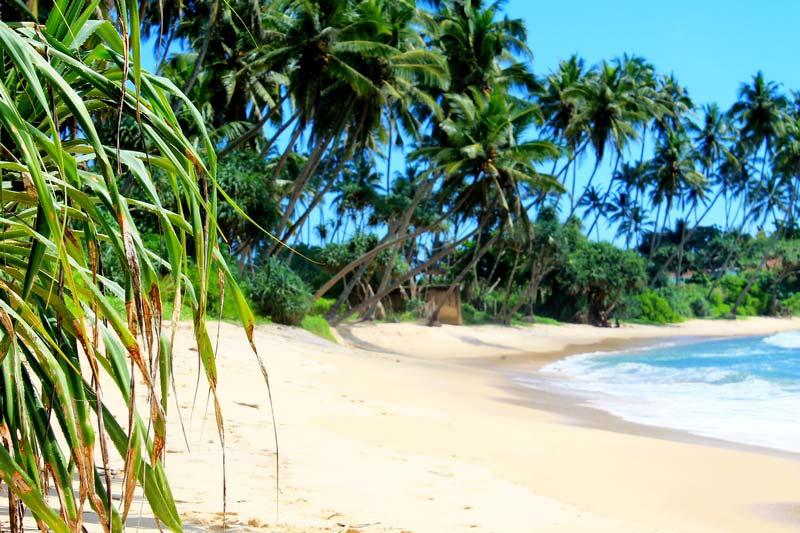 фото-пляж-диквелла