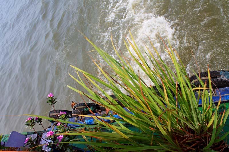 10-цветы-над-водой