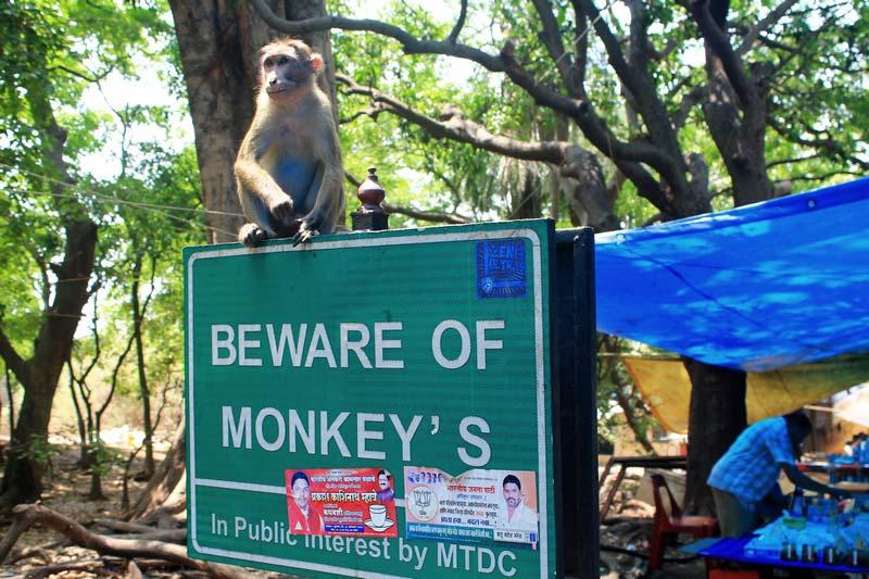 19а-обезьяны-остров-элефант