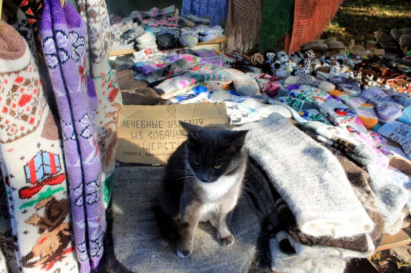 25 кот продавец