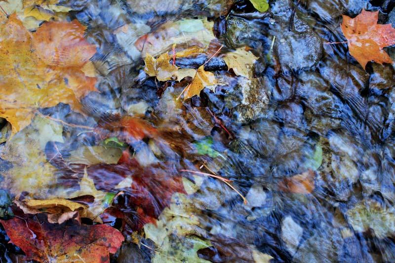 28 осенние листья в луже