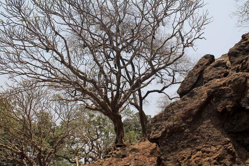 33а-природа-остров-элефант