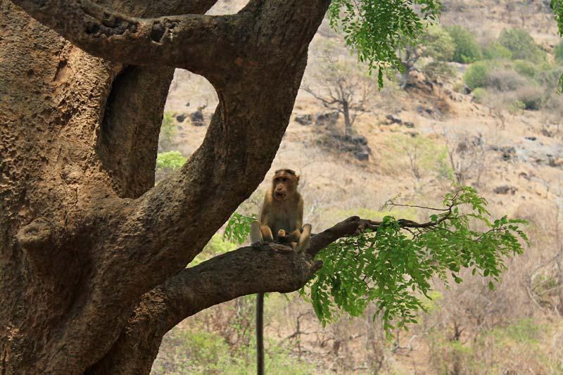 33-обезьянка-на-дереве