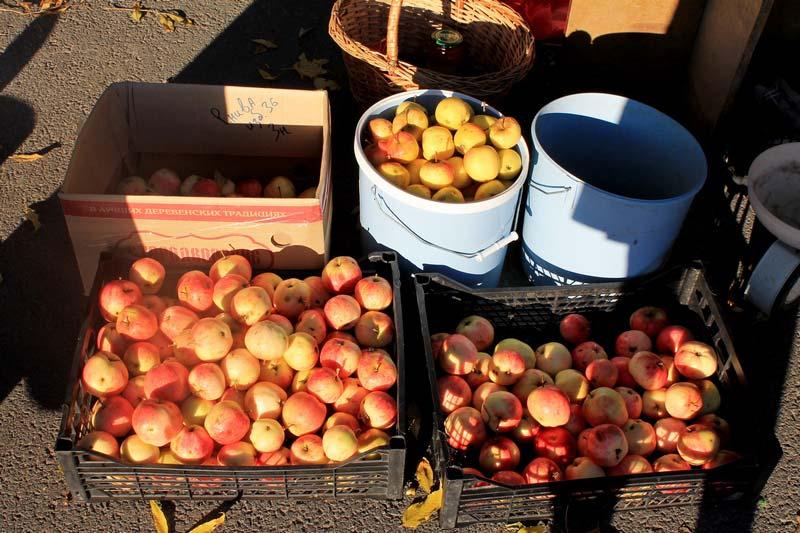5 урожай яблок