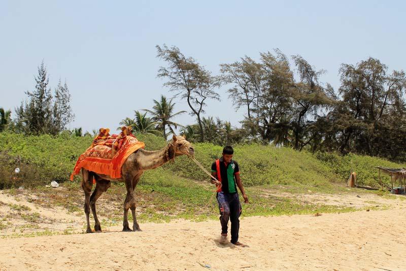 7-верблюд