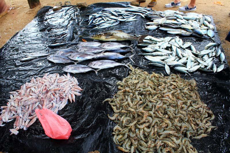 1а-морепродукты-шри-ланка