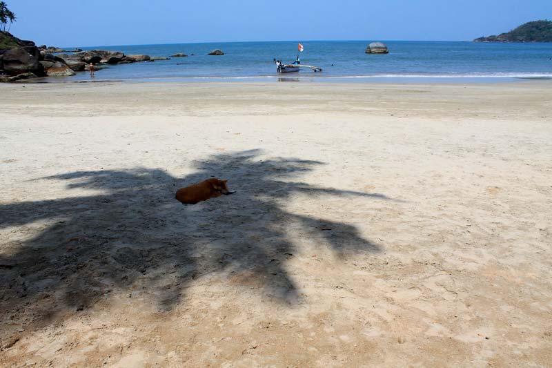 30-собака-на-пляже