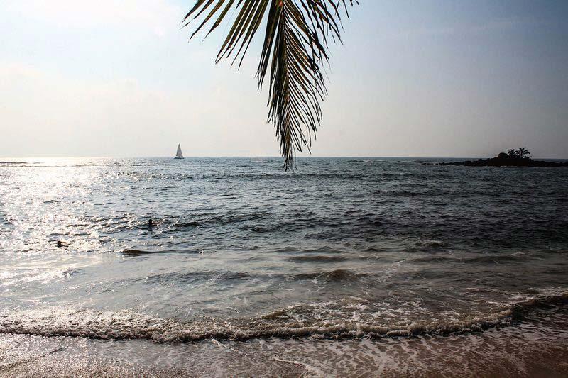 21-лист-пальмы-над-морем