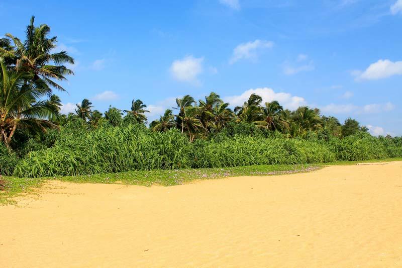 4-пальмы-додандува-пляж