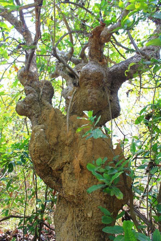 31-необычное-дерево