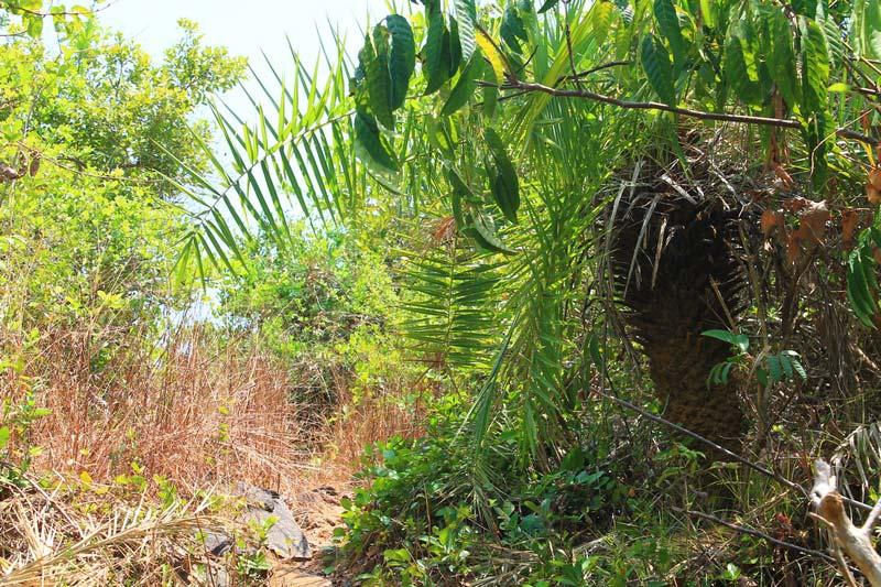 32-кактусы-джунги