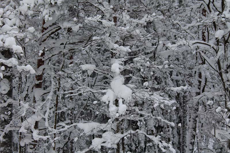 39-зимний-лес