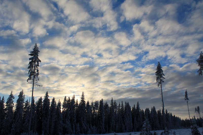 41-зимний-карельский-перешеек-фото