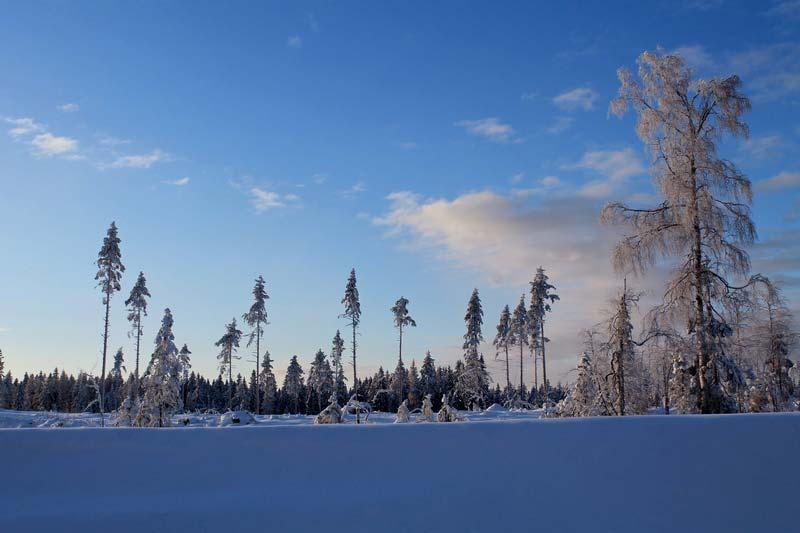 42а-фото-карельский-перешеек-зимой