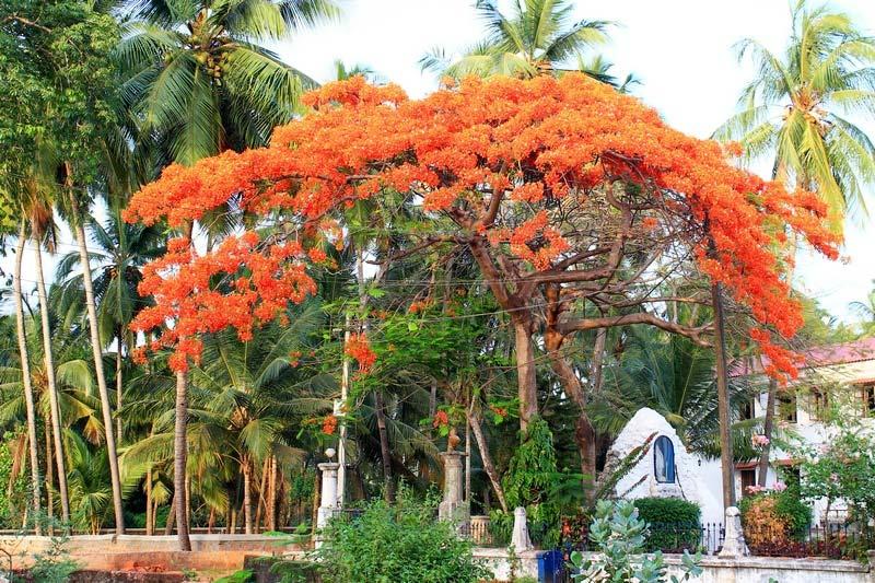43-дерево-с-красными-цветами