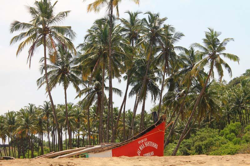 8-кокосовые-пальмы-фото