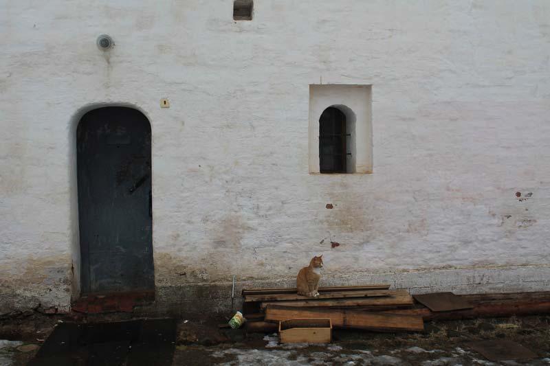 11 кошки тихвинского монастыря
