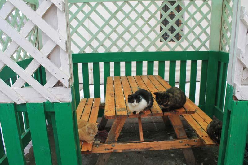 15 фото кошки в беседке