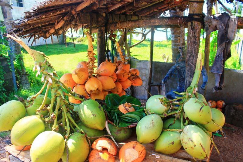 19a-kokosy-shri-lanke