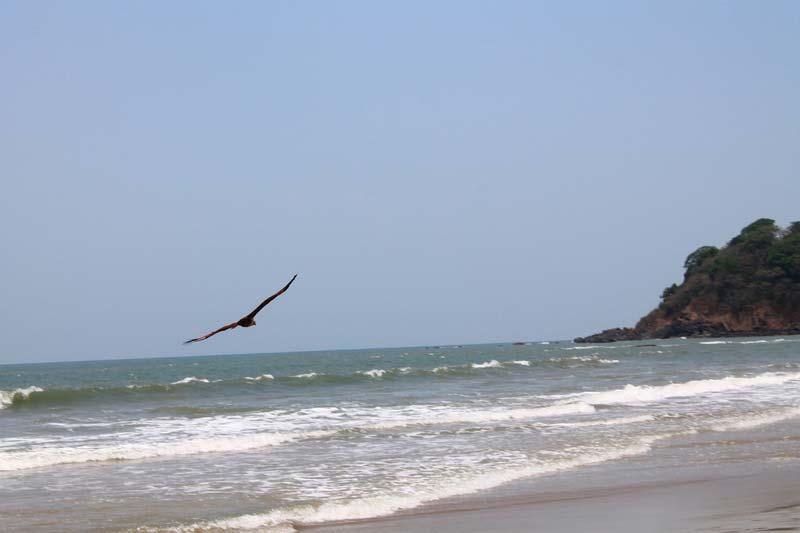 8-орел-над-морем-фото