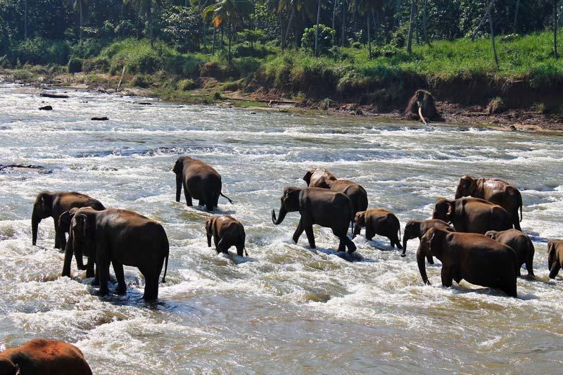 1-река-стадо-слонов-фото