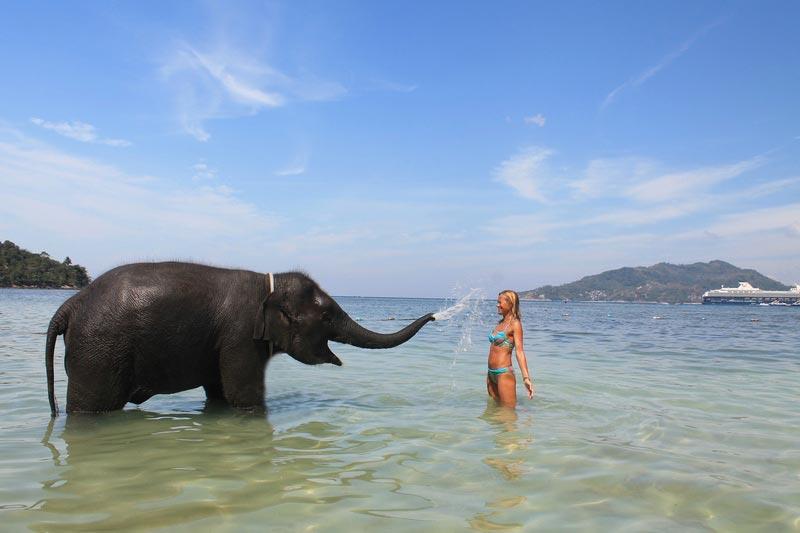 12-душ-из-хобота-слона