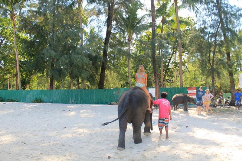 19-пхукет-три-транг-слон