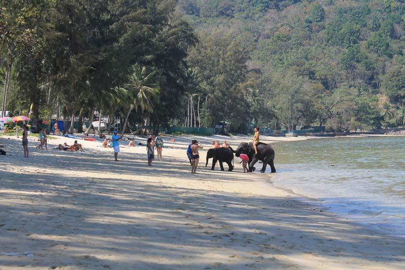 2-фото-слон-на-пляже