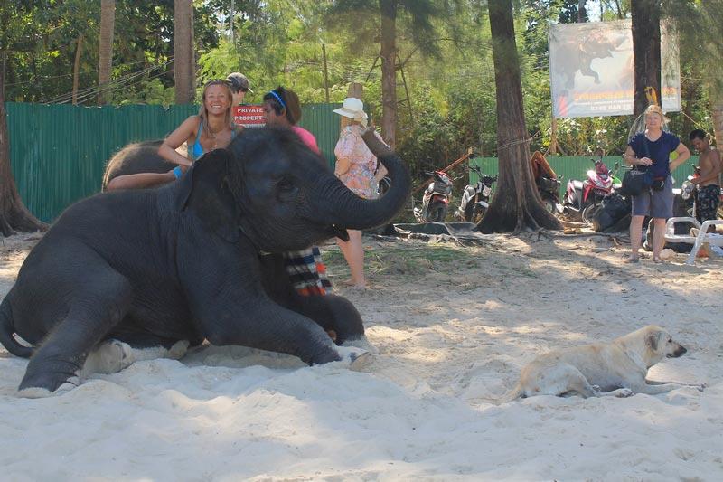 20-девушка-слон-собака-пляж