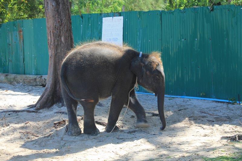 21-слоненок-на-пляже
