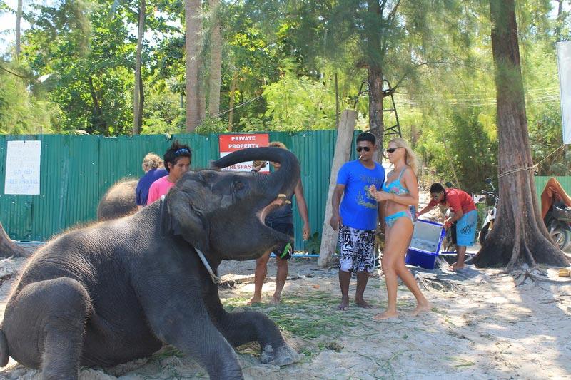 3-слон-пляж-фото