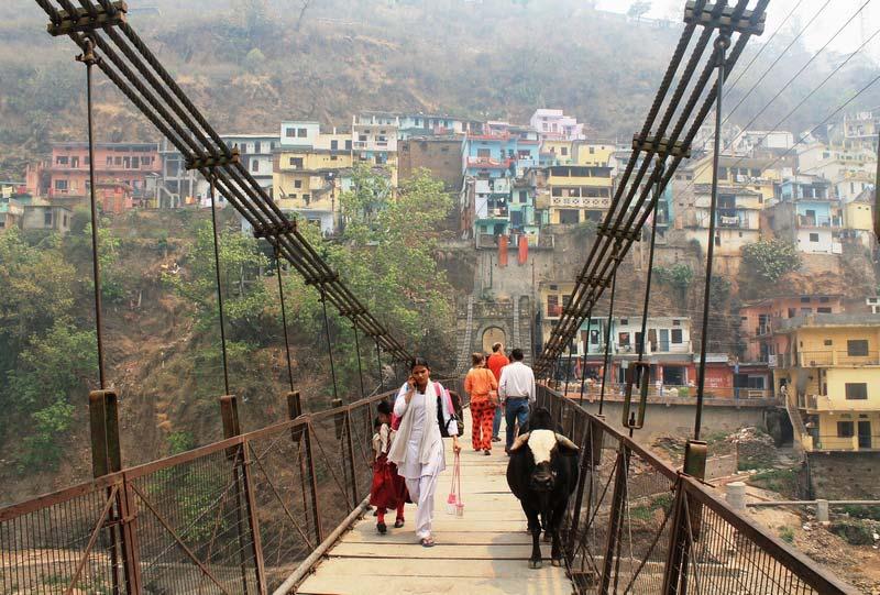 7-indiya-korovy-na-mostu