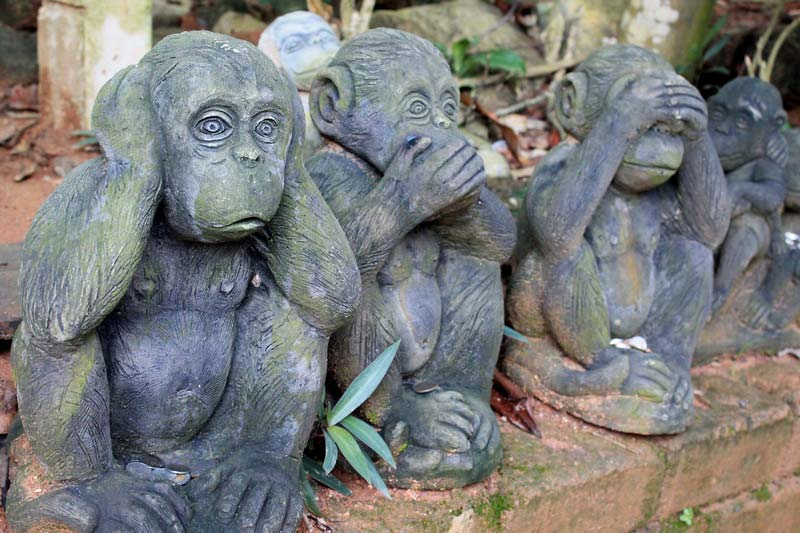22а-обезьяны-ничего-не-вижу