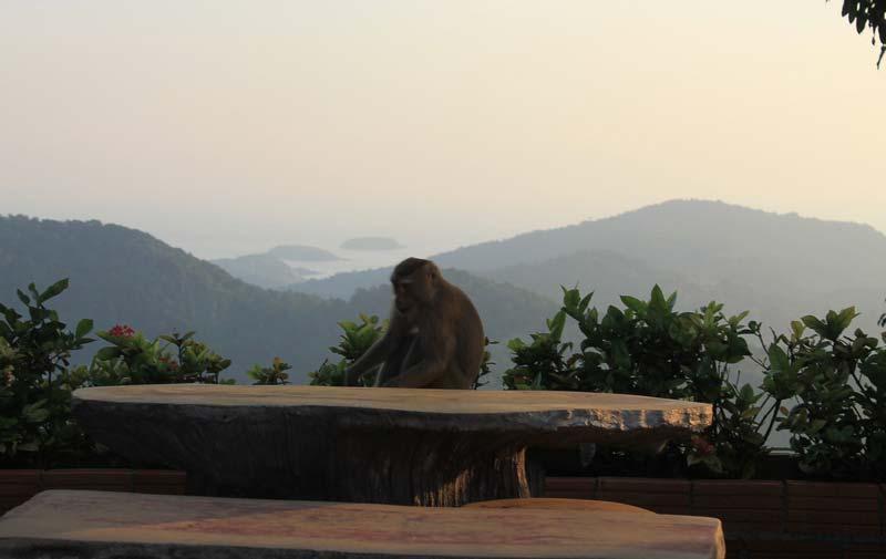 25-обезьяна-за-столом