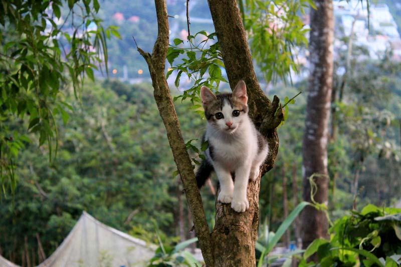 32-котик-на-дереве