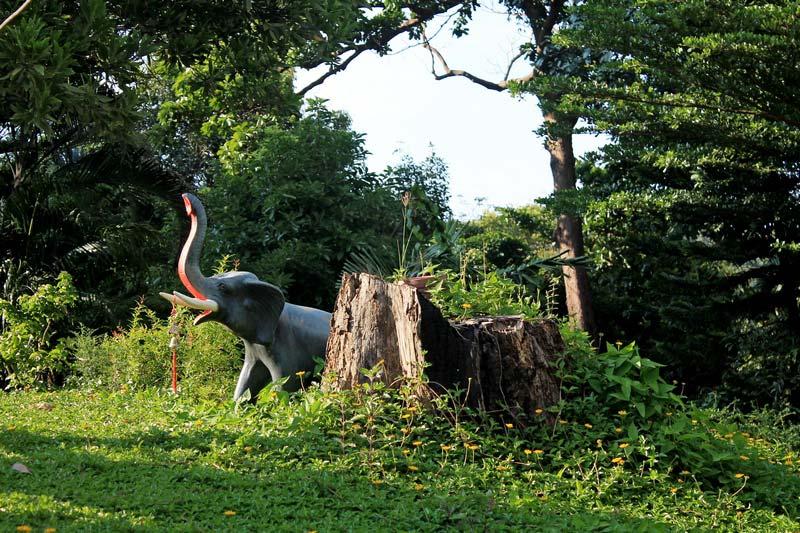 ко-чанг-остров-слоны-фото