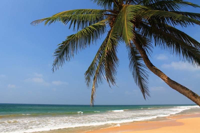 пальма-на-морем