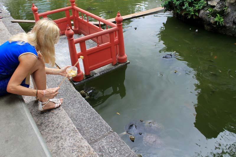 11-покормить-черепах-Бангкок