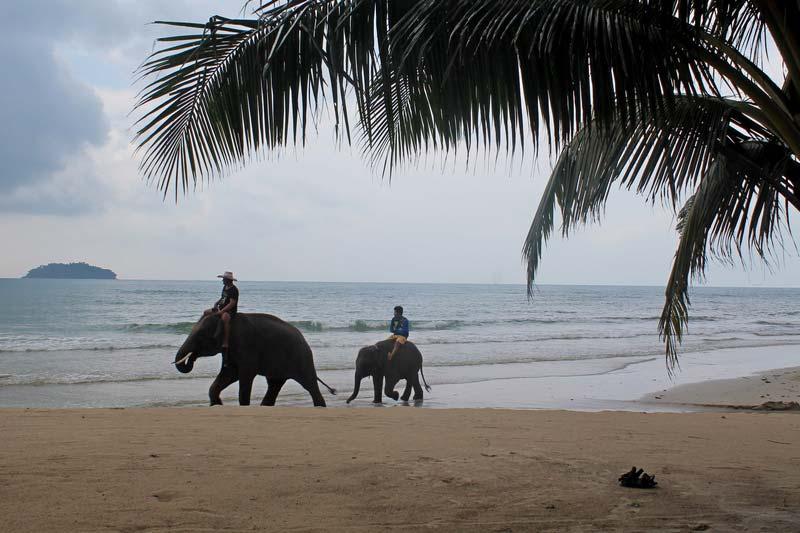 23-ко-чанг-купание-со-слонами
