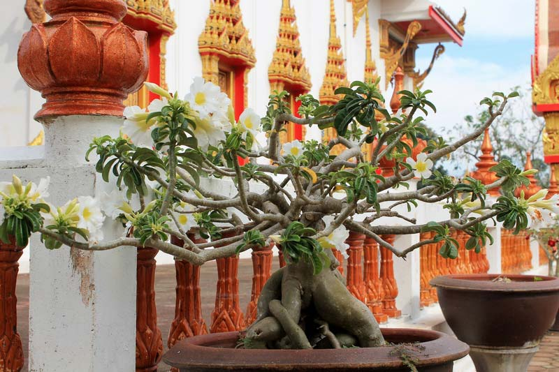 3-Ват-Чалонг-(Wat-Chalong)