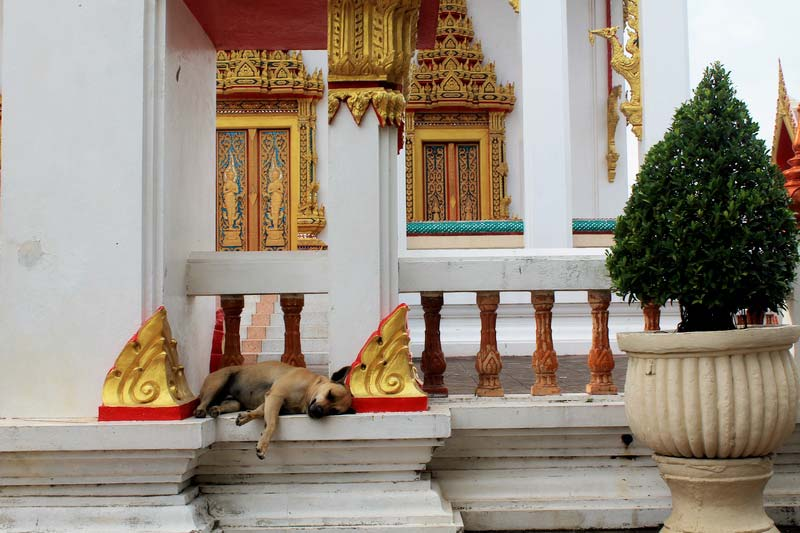 5-Ват-Чалонг-(Wat-Chalong)