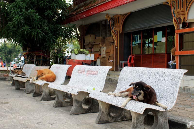 18--Wat-Chalong-photo