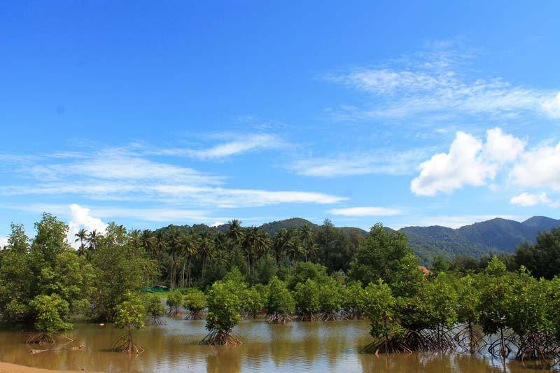 11а-мангровые-заросли-ко-чанг